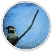 Sparrow On Blue Round Beach Towel by Dan Sproul