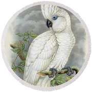 Blue-eyed Cockatoo Round Beach Towel by William Hart