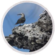 Blue-footed Booby Round Beach Towel by John Shaw