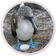 Blue-footed Booby Round Beach Towel by M. Watson