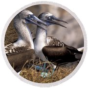 Blue-footed Booby Round Beach Towel by Ron Sanford