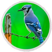 Blue Jay On The Fence Round Beach Towel by Robert Frederick