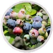 Blueberries On The Vine Round Beach Towel by Carol Groenen
