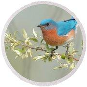 Bluebird Floral Round Beach Towel by William Jobes