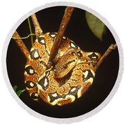 Boa Constrictor Round Beach Towel by Art Wolfe