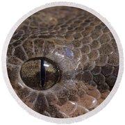 Boa Constrictor Round Beach Towel by Chris Mattison FLPA