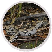 Boa Constrictor Round Beach Towel by Francesco Tomasinelli