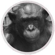 Bonobo Round Beach Towel by Dan Sproul