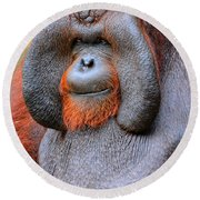 Bornean Orangutan Iv Round Beach Towel by Lourry Legarde