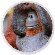 Bornean Orangutan Vi Round Beach Towel by Lourry Legarde