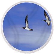 Brown Booby Round Beach Towel by James L. Amos