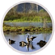 Canada Goose Dancing On Lake Round Beach Towel by Christina Rollo