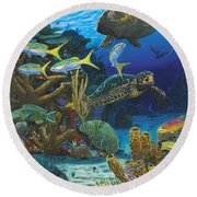 Cayman Turtles Re0010 Round Beach Towel by Carey Chen