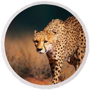 Cheetah Approaching From The Front Round Beach Towel by Johan Swanepoel