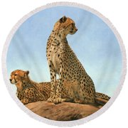 Cheetahs Round Beach Towel by David Stribbling