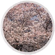 Cherry Blossoms Blooming In Springtime Round Beach Towel by Panoramic Images