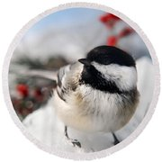 Chilly Chickadee Round Beach Towel by Christina Rollo