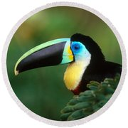 Citron-throated Toucan Round Beach Towel by Art Wolfe
