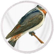 Cliff Swallow  Round Beach Towel by Anonymous