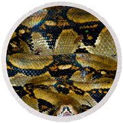 Close-up Of A Boa Constrictor, Arenal Round Beach Towel by Panoramic Images