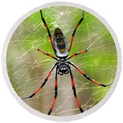 Close-up Of A Golden Silk Orb-weaver Round Beach Towel by Panoramic Images