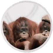 Close-up Of Three Orangutans Round Beach Towel by Panoramic Images