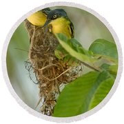 Close-up Of Two Common Tody-flycatchers Round Beach Towel by Panoramic Images