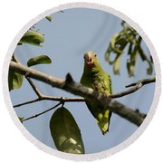 Cobalt-winged Parakeet Round Beach Towel by Dr. Gilbert S. Grant