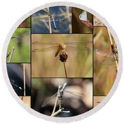 Collage Marsh Life Round Beach Towel by Carol Groenen