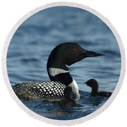 Common Loon Family Round Beach Towel by James Peterson