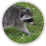 Common Raccoon Round Beach Towel by Sharon Talson