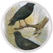 Common Starling Top And Intermediate Starling Bottom Round Beach Towel by English School
