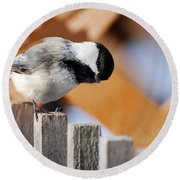 Curious Chickadee Round Beach Towel by Christina Rollo