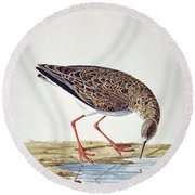 Curlew Sandpiper Round Beach Towel by Charles Collins