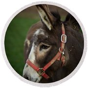 Donkey Round Beach Towel by Shane Holsclaw
