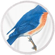 Eastern Bluebird Round Beach Towel by Anonymous