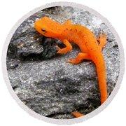 Orange Julius The Eastern Newt Round Beach Towel by Lori Pessin Lafargue