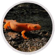Eastern Newt Red Eft Round Beach Towel by Christina Rollo