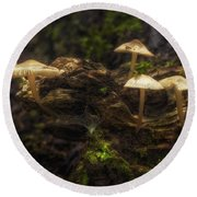Enchanted Forest Round Beach Towel by Scott Norris