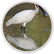 Eurasian Spoonbill Platalea Leucorodia Round Beach Towel by Panoramic Images
