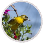 Female Baltimore Oriole In A Flower Basket Round Beach Towel by Christina Rollo
