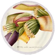 Flower Of The Banana Tree  Round Beach Towel by Georg Dionysius Ehret