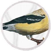 Goldfinch  Round Beach Towel by Anonymous