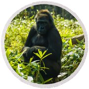 Gorilla Sitting On A Stump Round Beach Towel by Chris Flees
