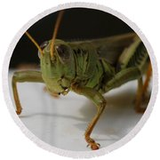 Grasshopper Round Beach Towel by Dan Sproul