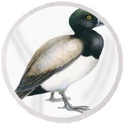 Greater Scaup Round Beach Towel by Anonymous