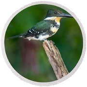 Green Kingfisher Chloroceryle Round Beach Towel by Panoramic Images