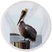 Handsome Brown Pelican Round Beach Towel by Carol Groenen