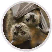 Hang In There Round Beach Towel by Mike  Dawson