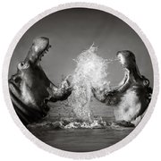 Hippo's Fighting Round Beach Towel by Johan Swanepoel